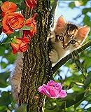Pink Kitten Composition Book Journal: Wide Ruled Notebook