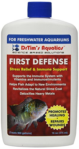 Best Fish For First Time Aquarium Owners