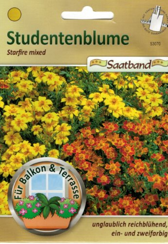 Studentenblume Starfire mixed Saatband für Balkon & Terrasse unglaublich reichblühend ein- und zweifarbig 53070