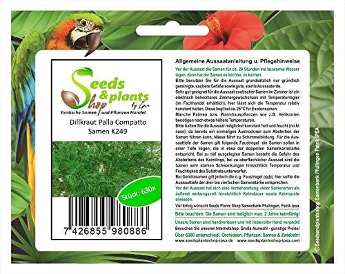 630 hierba eneldo Palla Compatto semilla novedad fresco jardín semilla K249