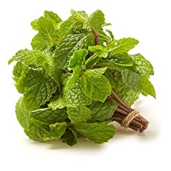 Organic Mint, .75 oz Clamshell