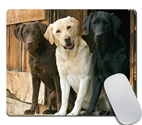 Amcove Funny Mouse Pad, Animals Dogs Chocolate Yellow Black Labs, Office Desk Accessories, Dogs Gifts for Her, Office Decor, Dog Mousepad, Desk Decor