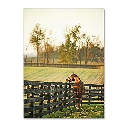 Trademark Fine Art Kentucky Horse Sunrise by Preston Hanging Art Piece