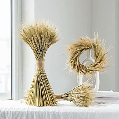 Sunwayi Dried Wheat Stalks for Decor, 100 Stems 16.5inch Natural Dried Wheat Bundle for DIY Flower Arrangement and Decoration Home Table Wedding