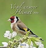 Vögel unserer Heimat 2020: Aufstellbarer Postkartenkalender mit Bildern von Vögeln in der Natur der Heimat. Tisch- und Wandkalender.