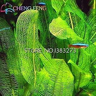 ガーデンは、中国の安いハーブの種を植えるための200個の新しいステビアの種、ステビアハーブ種子グリーンハーブ、ステビアSemillas