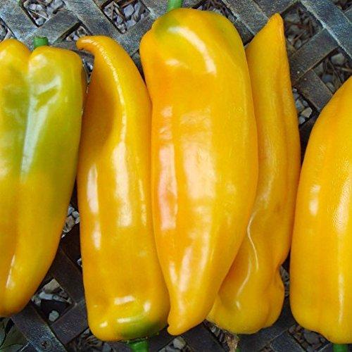 Peperone corno di toro giallo (Semente)