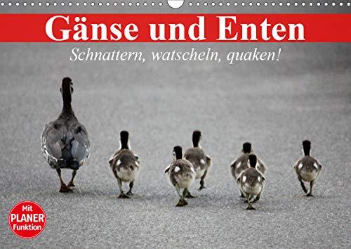 Gänse und Enten. Schnattern, watscheln, quaken! (Wandkalender 2021 DIN A3 quer)