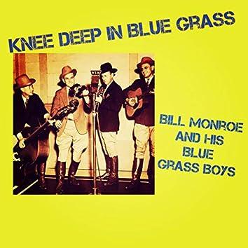 Knee Deep in Blue Grass