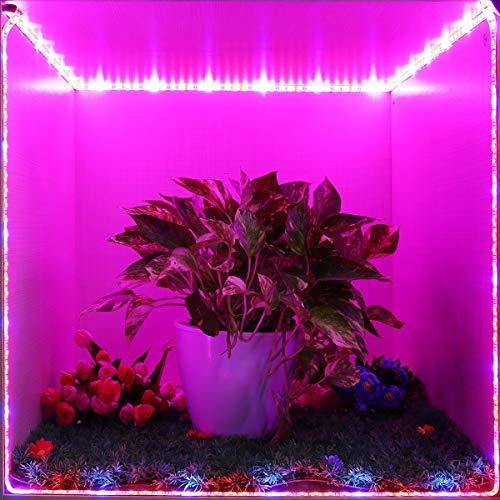 OSSUN® plantenverlichting LED plantenlicht groeilamp SMD 5050 waterdicht groeilicht rood blauw 5:1 voor aquarium broeikas hydrocultuur planten [energieklasse A ] 2 metres with Power RGB