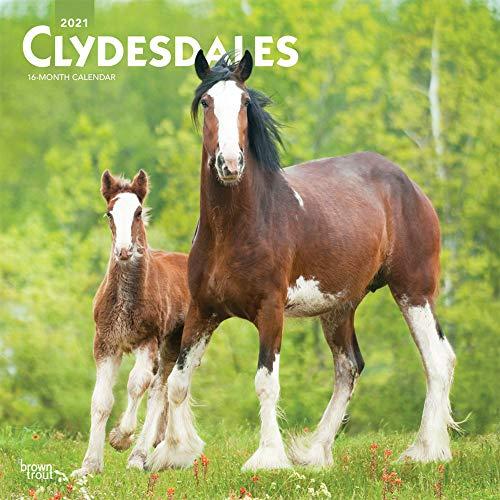 Clydesdales - Clydesdale Pferde 2021- 16-Monatskalender: Original BrownTrout-Kalender [Mehrsprachig] [Kalender] (Wall-Kalender)