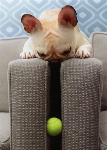 Frenchie Finds Ball - Avanti Funny Dog Thank You Card