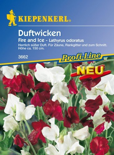 Kiepenkerl Lathyrus odoratus (Duftwicken) Fire and Ice