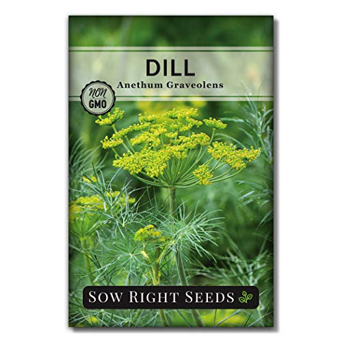 Sow Right Seeds - Dill Seed for Planting - All Non-GMO Heirloom Dill Seeds with...