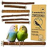 6 Natur Sitzstangen: für Wellensittich, Kanarienvogel, Nymphensittich. VERBESSERT: Edelst...