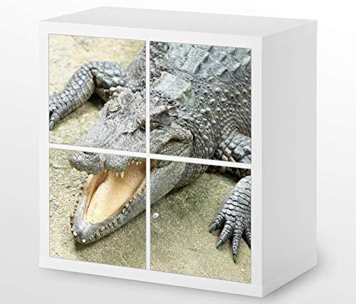 Set Möbelaufkleber für Ikea Kallax 4 Fächer/Schubladen Alligator Krokodil Tier Kat6 böse Zähne Aufkleber Möbelfolie sticker (Ohne Möbel) Folie 25H455