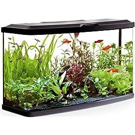 Süßwasseraquarium Fluval VUE Aquarienset