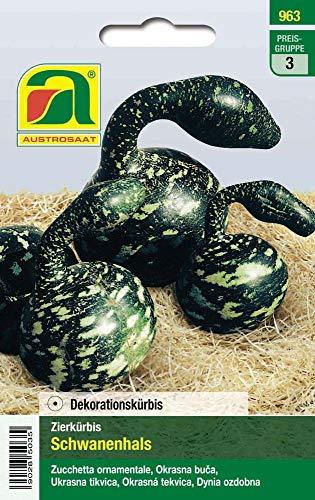 Austrosaat 963 Zierkürbis Schwanenhals (Zierkürbissamen)