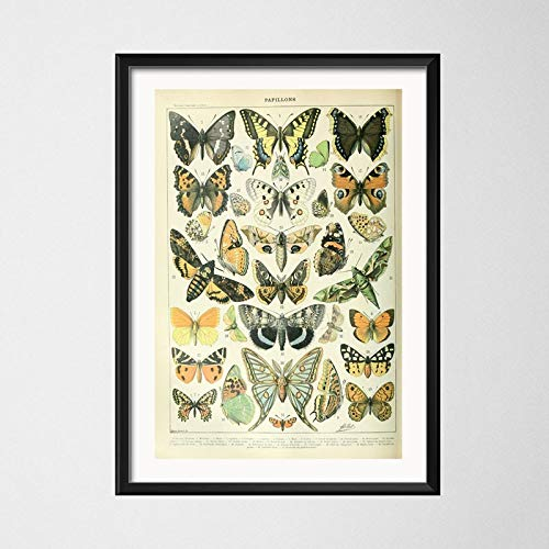 baodanla Leinwand Malerei Malerei Poster Poster Insektenmuster Malerei hochwertige Leinwand Malerei Home Dekoration rahmenlos50x75cm(Kein Rahmen)