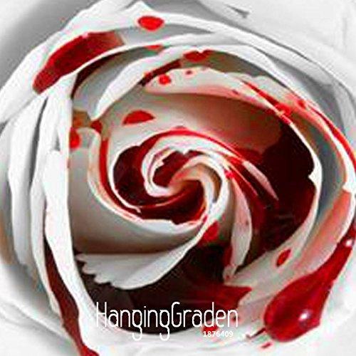 Perte de promotion! 150 PCS les plus rares Graines de fleurs Blanc Sang Rose Plante Flower Garden Asaka True Blood Rare Rose semences, # 65WXQ3