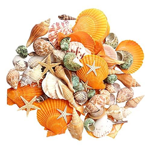 Colcolo Acquario Natural Shells Decor Decor Decor Decoration View FAI DA TE Artigianato Decorazione per Giardino Interno All'aperto