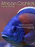 African Cichlids, The Pet of Kings! - How to tame...