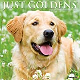 Just Goldens 2021 Wall Calendar (Dog Breed Calendar)