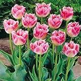 Adolenb Seeds House- 50/100 Pcs Graines de Rare Tulip Graines de Fleur Graines mix tulipe odorante Graines vivace Fleur pour Jardin en Bonsai (50pcs / sac)