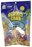 Florida Marine Research SFM33331 Hermit Crab Shell, Large by Florida Marine Research