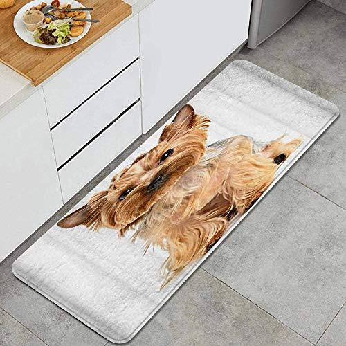XINGAKA Alfombra de CocinaPerro Schnauzer Disfrazado de Animal Lindo CachorroAlfombrilla de Cocina Antideslizante Gruesa45*120cm