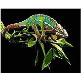 clockfc Dekorative malerei malen nach Zahlen DIY grüne Eidechse Zweig Tier leinwand Hochzeit Dekoration Kunst Bild Geschenk 40x50cm(mit Rahmen)