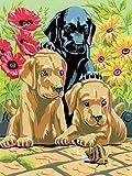 FNBN Pintar por numeros Adultos DIY Pintura Digital Painting by Number Labrador Puppy Painting Set