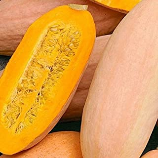 David's Garden Seeds Squash Winter Pink Banana Jumbo SL1285 (Pink) 50 Non-GMO, Heirloom Seeds