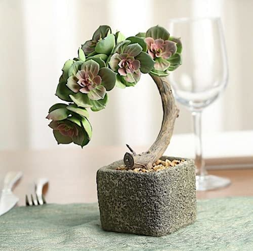 Concrete Ranking TOP18 Pot with Max 67% OFF Faux Green Succulents Brow Wedding Decorations