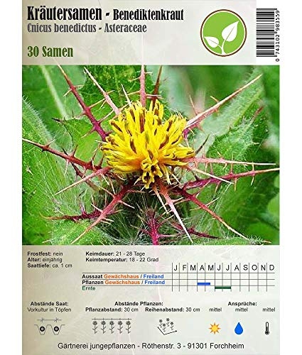 Semillas de hierbas - Cardo santo/Cnicus bendictus - Asteraceae 30 semillas
