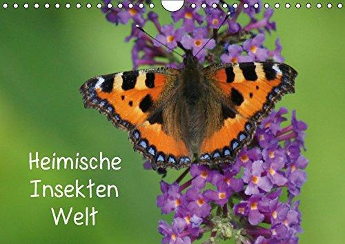 Heimische Insekten Welten (Wandkalender 2019 DIN A4 quer): Schmetterlinge und andere Insekten in Deutschland (Monatskalender, 14 Seiten ) (CALVENDO Tiere)