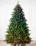 Balsam Hill 6ft Premium Pre-Lit Artificial Christmas Tree Classic Blue Spruce with LED Twinkly Light Show, Storage Bag, and Fluffing Gloves