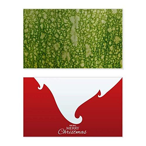 Groene pompoen schil Macro foto patronen vakantie vrolijke kerstkaart Kerstmis Vintage bericht