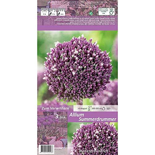 Florado 3x Zierlauch Blumenzwiebeln `Summer Drummer`, Garten, Blumen Schnittblumen Zwiebelblumen, Bienen Insekten Hummeln, Größe 12/+