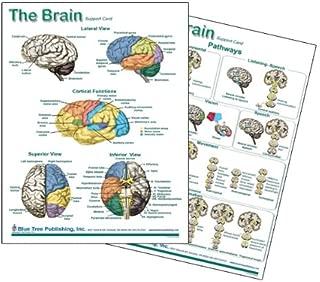 Brain Chart, Neurology