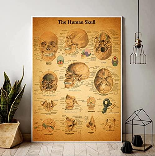 SXXRZA Cuadros de Pared 50x70cm Sin Marco Anatomía Humana Hospital Retro Carteles e Impresiones Doctor Oficina Decoración Esqueleto Anatomía Arte de la Pared del cráneo