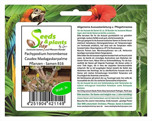 Stk - 3x Pachypodium horombense Caudex Madagaskarpalme Pflanzen - Samen B16 - Seeds Plants Shop Samenbank Pfullingen Patrik Ipsa
