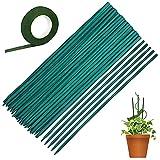 50 Varillas Tutores para Plantas Trepadoras Verde Palo de la Planta 38 cm Soporte de la Planta Floral Estaca de Bambú de Madera con 30 Yardas de Cinta de Papel de Flor Verde Oscuro