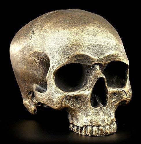 Calavera Sin mandíbula inferior - antik-goldfarben - Figura Calavera Gótica Cráneo Decoración SKULL