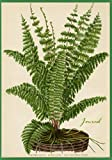 Journal: Vintage Fern Botanical Print Cover, Lined Notebook, 7'x10'/B5 size