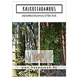 Bambus Samen mit hoher Keimrate - Bambussamen schnellwachsend & winterhart ideal als dekorativer Sichtschutz (Kalkuttabambus)