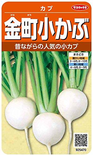 サカタのタネ 実咲野菜5470 金町小かぶ カブ 00925470