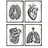 Vintage Anatomical Organs, Wood Replica Wall Art Photo Set - 8x10 Rustic Farmhouse, Shabby Chic Poster Prints for Medical Clinic, Dr Office - Gift for Doctor, Nurse - Unframed Poster Pictures