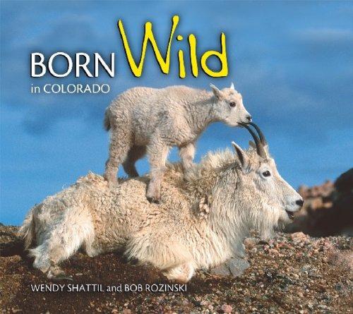 Born Wild in Colorado