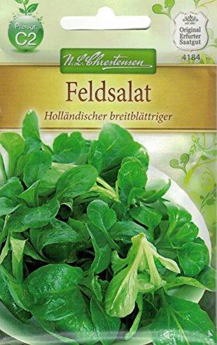 Chrestensen Feldsalat 'Holländischer breitblättriger'